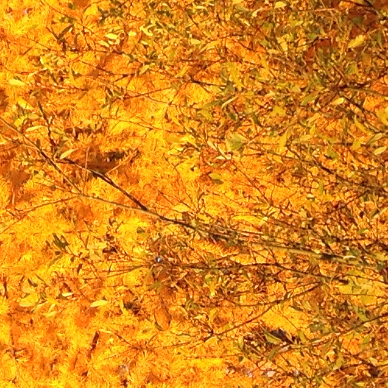 Syksy tulee lehdet putoaa. Luonto kauniin värityksen saa.